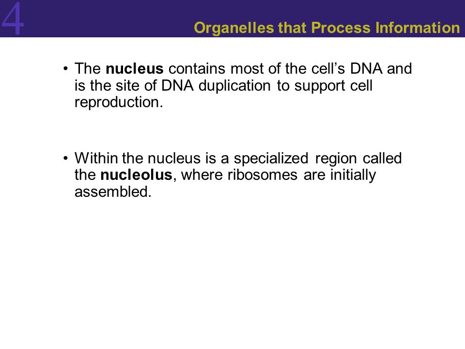 Organelles that Process Information