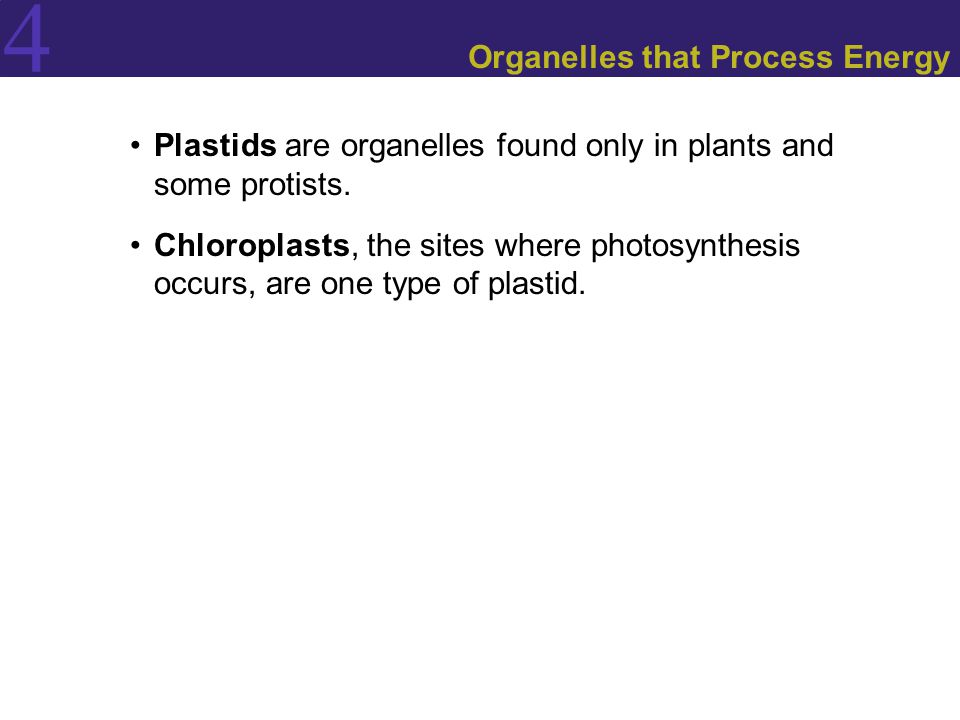 Organelles that Process Energy