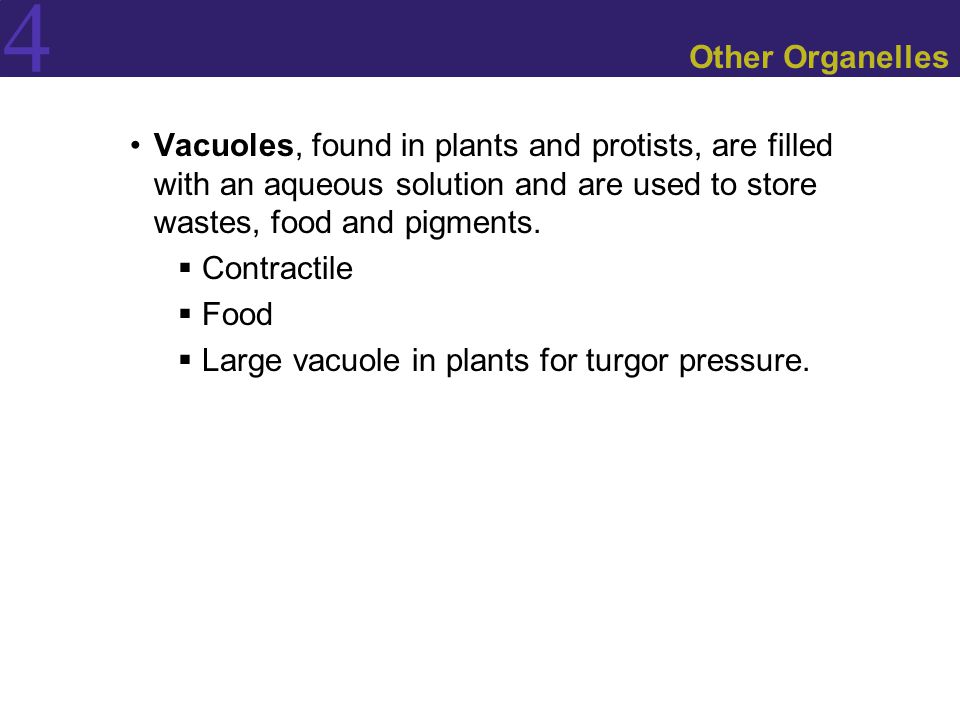 Other Organelles Vacuoles, found in plants and protists, are filled with an aqueous solution and are used to store wastes, food and pigments.