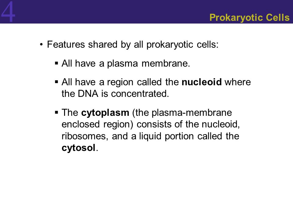 Prokaryotic Cells Features shared by all prokaryotic cells: All have a plasma membrane.