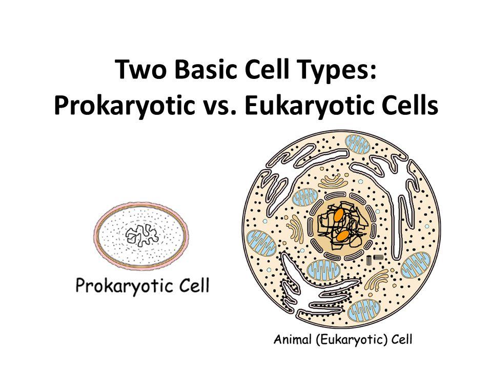 Two Basic Cell Types Prokaryotic Vs Eukaryotic Cells Ppt Video