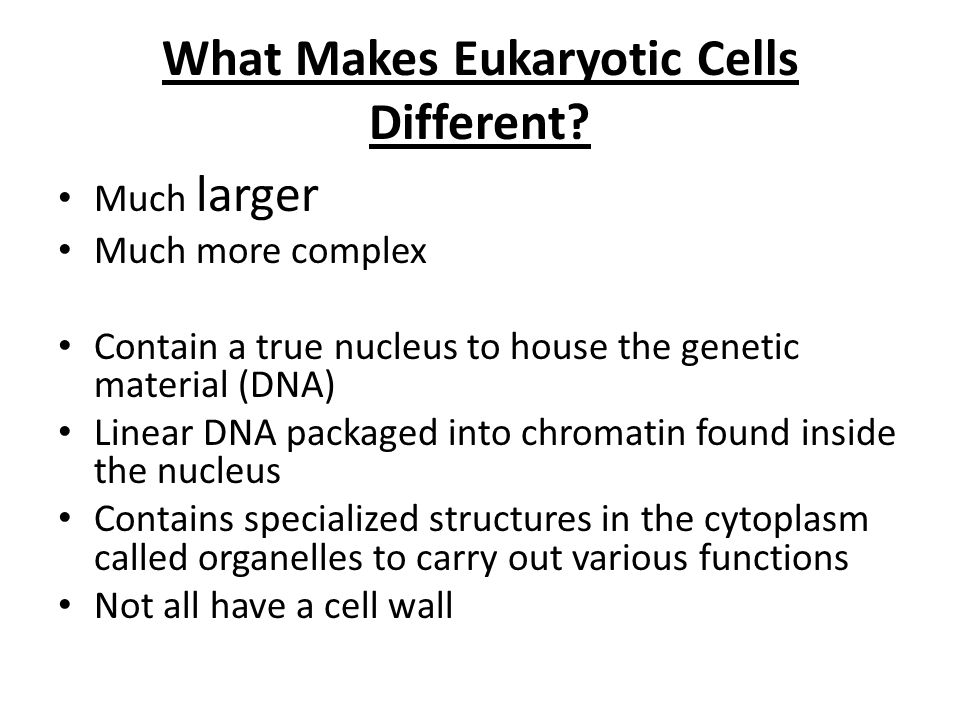 What Makes Eukaryotic Cells Different