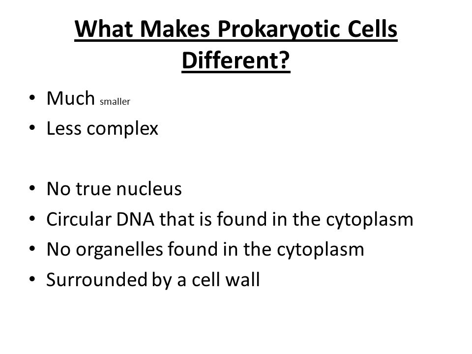 What Makes Prokaryotic Cells Different