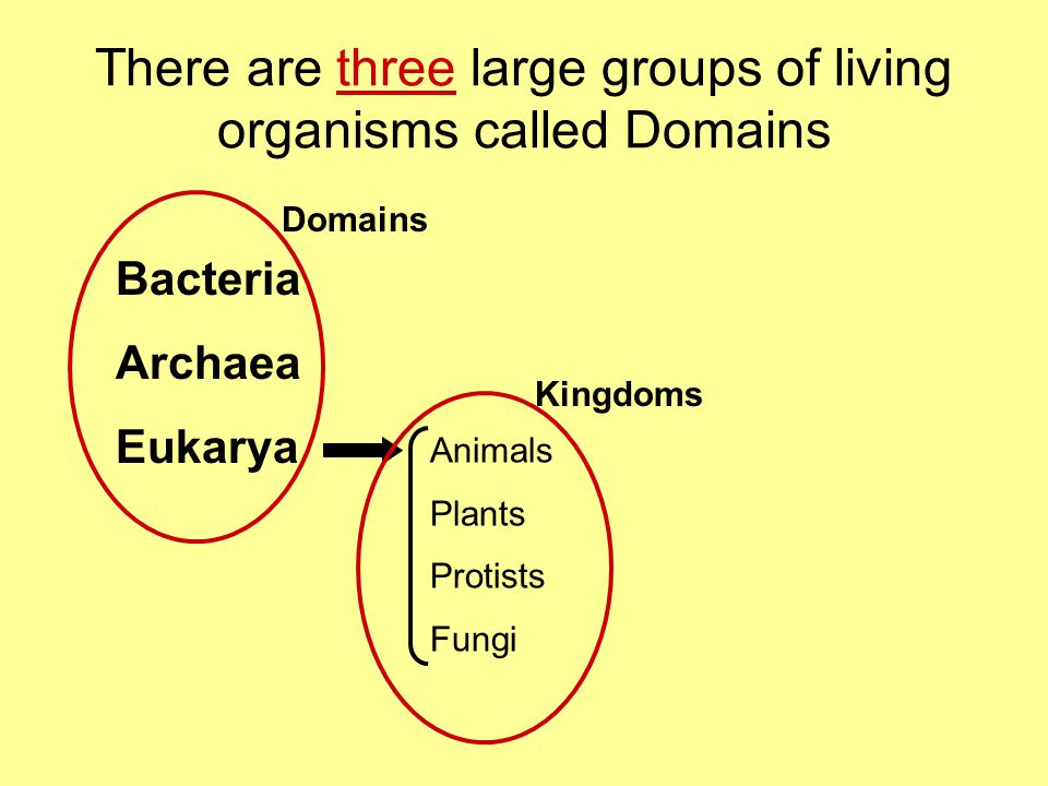 There are three large groups of living organisms called Domains