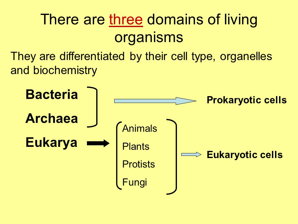 There are three domains of living organisms