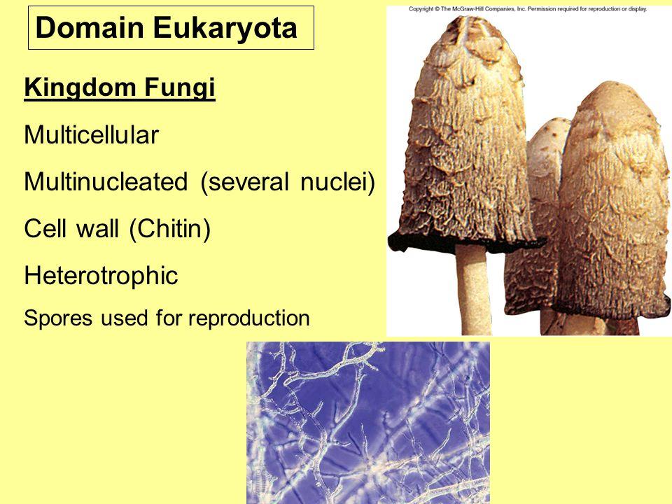 Domain Eukaryota Kingdom Fungi Multicellular
