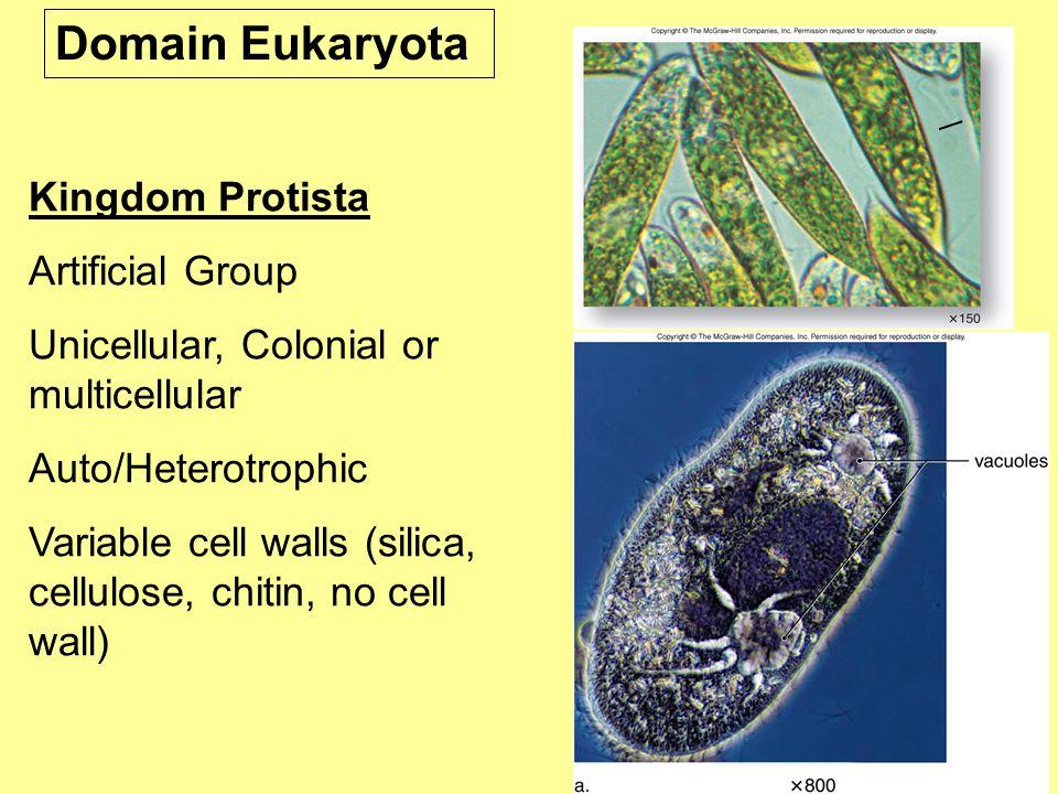 Domain Eukaryota Kingdom Protista Artificial Group