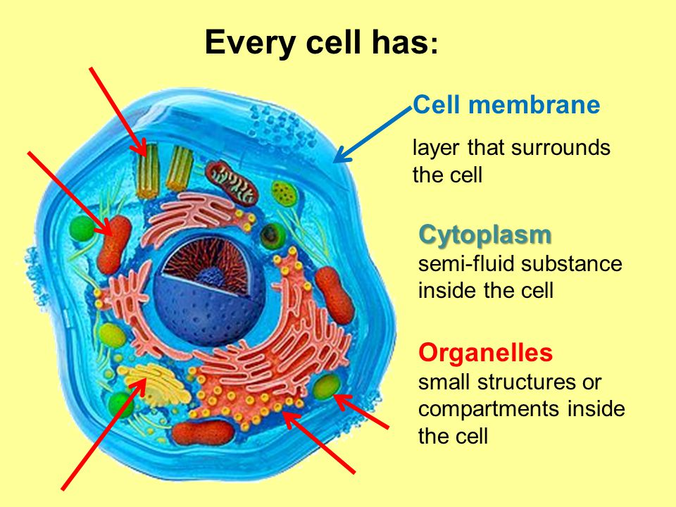 Every cell has: Cell membrane