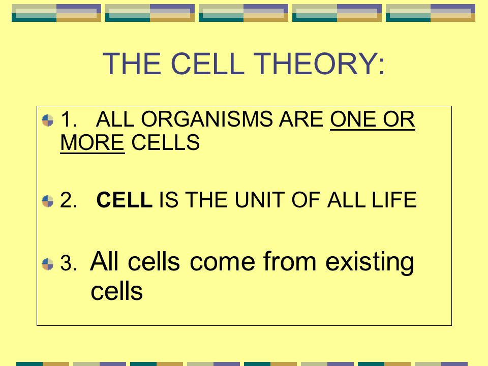 THE CELL THEORY: 1. ALL ORGANISMS ARE ONE OR MORE CELLS