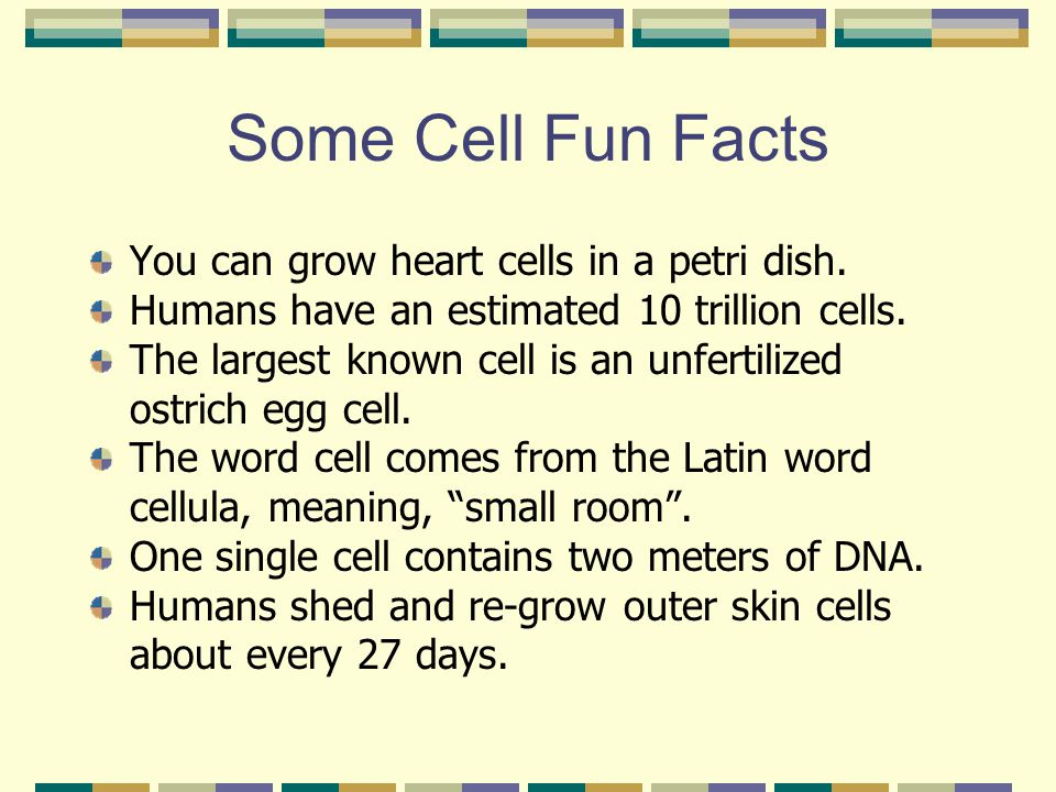 Some Cell Fun Facts You can grow heart cells in a petri dish.