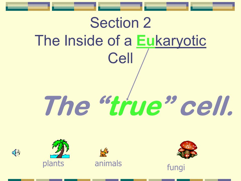Section 2 The Inside of a Eukaryotic Cell