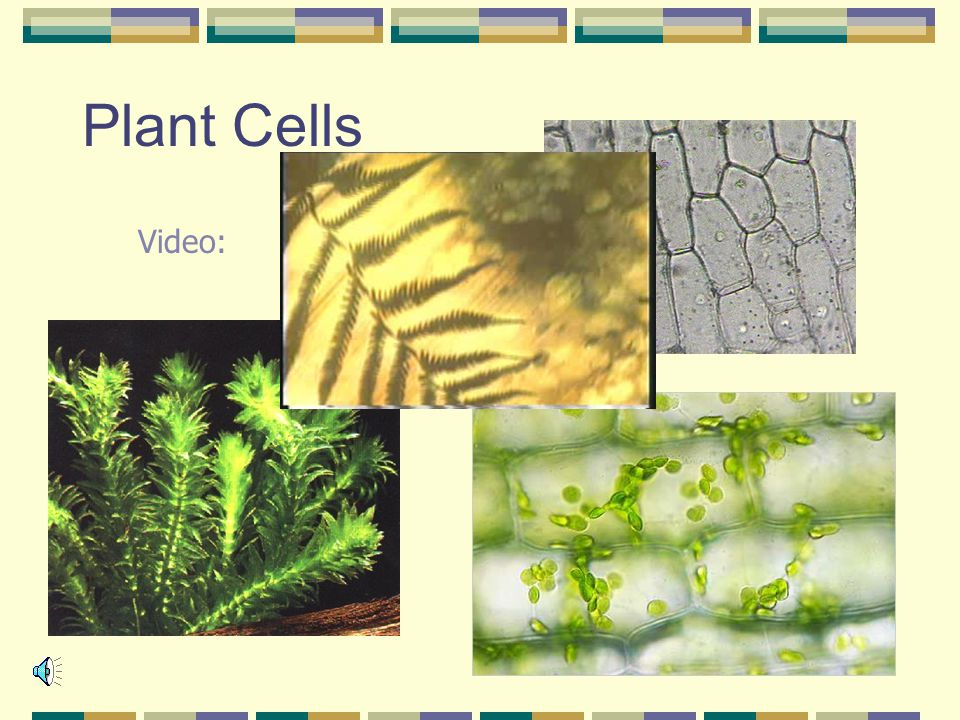 Plant Cells Video: