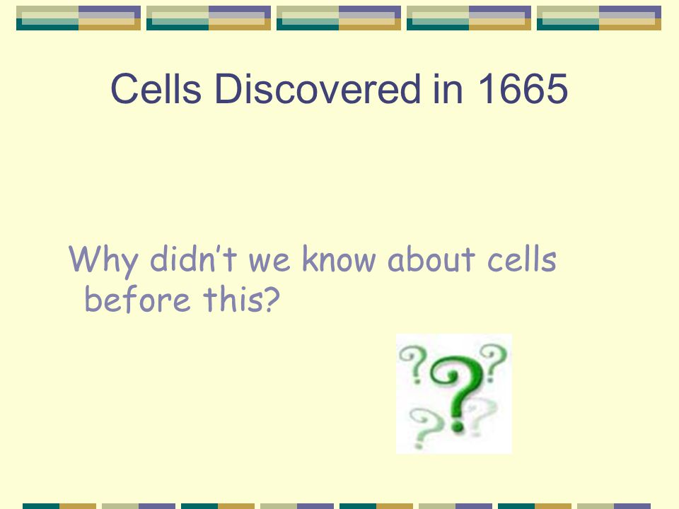 Cells Discovered in 1665 Why didn't we know about cells before this