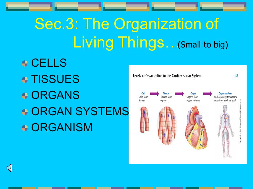 Sec.3: The Organization of Living Things…