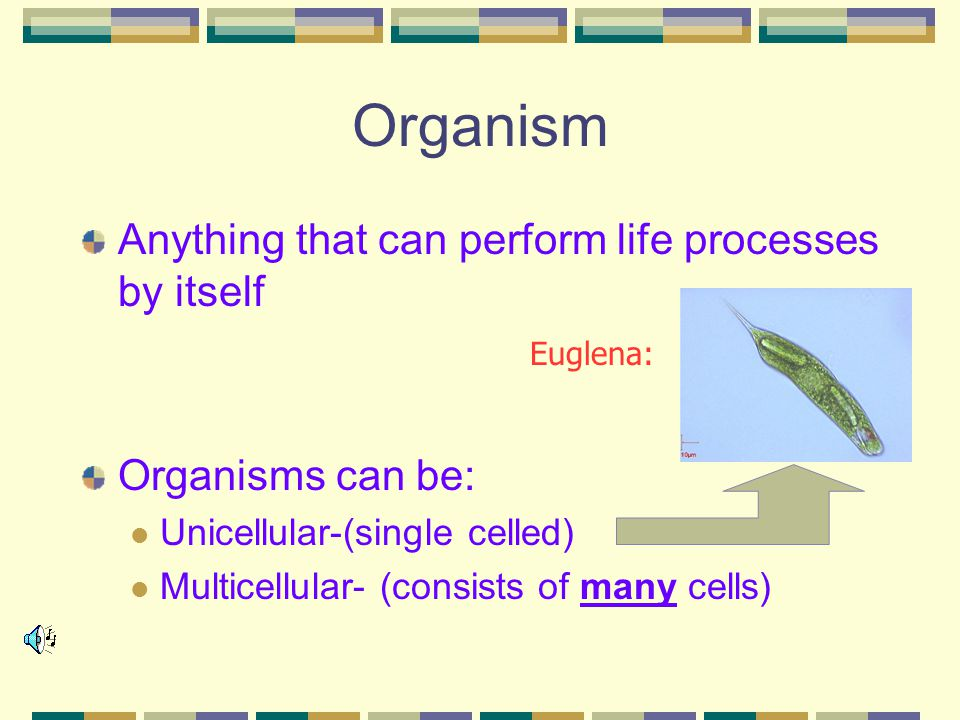 Organism Anything that can perform life processes by itself