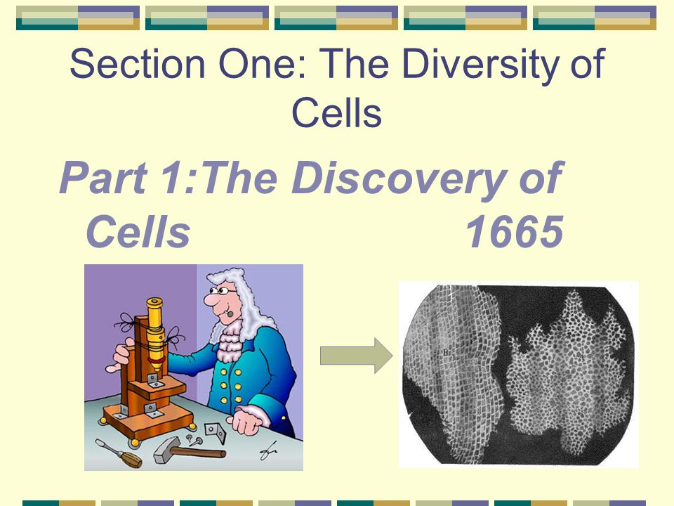 Section One: The Diversity of Cells