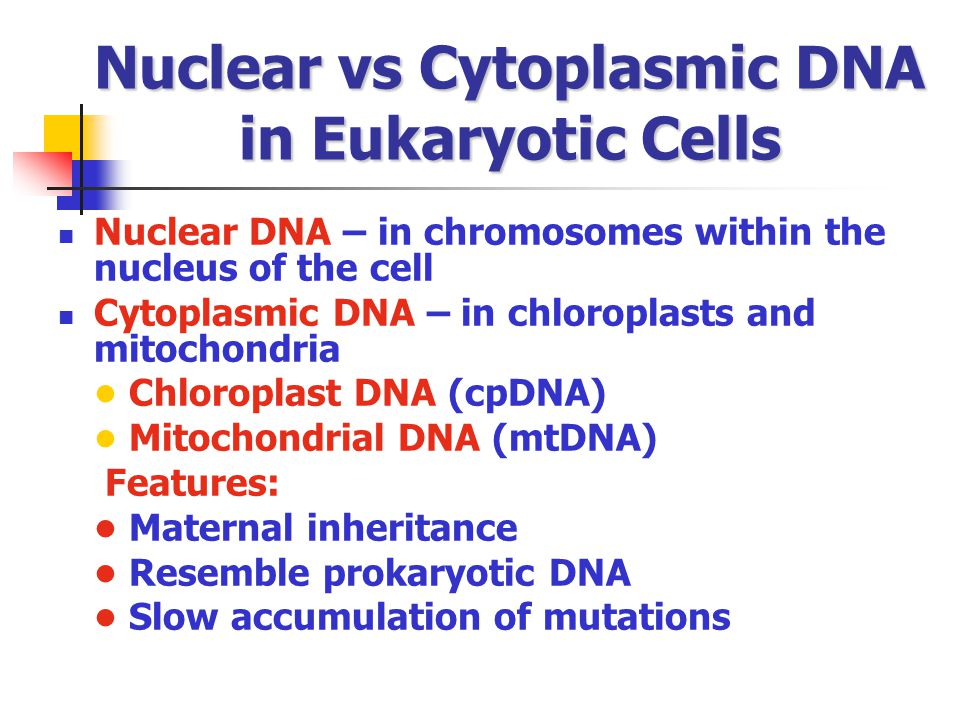 Nuclear vs Cytoplasmic DNA in Eukaryotic Cells