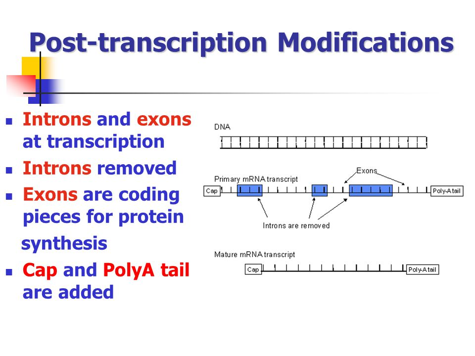 Post-transcription Modifications