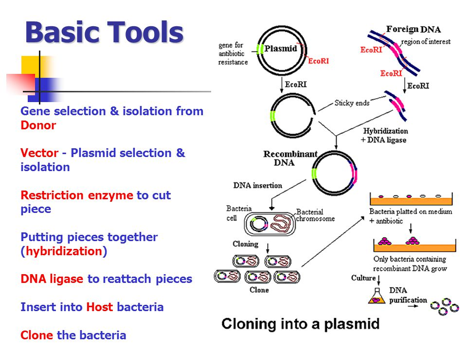 Basic Tools Gene selection & isolation from Donor
