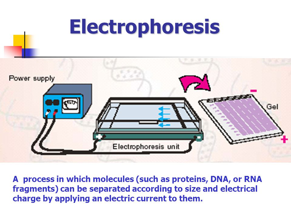 Electrophoresis A process in which molecules (such as proteins, DNA, or RNA. fragments) can be separated according to size and electrical.