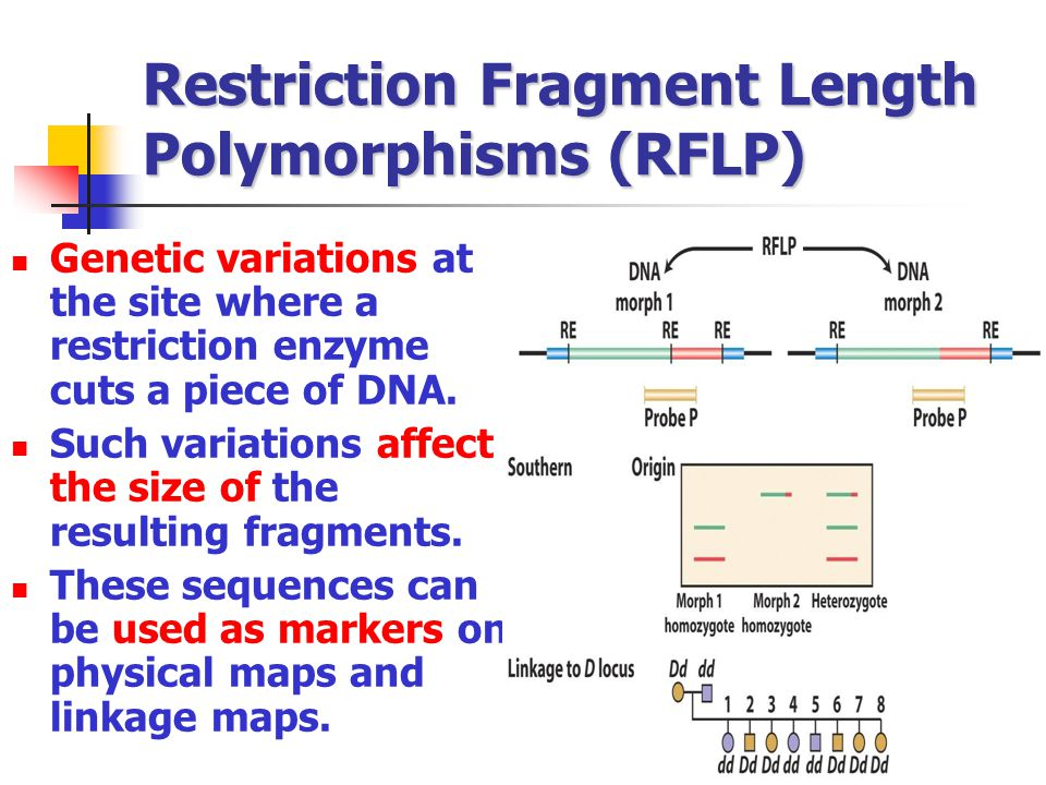 Restriction Fragment Length Polymorphisms (RFLP)