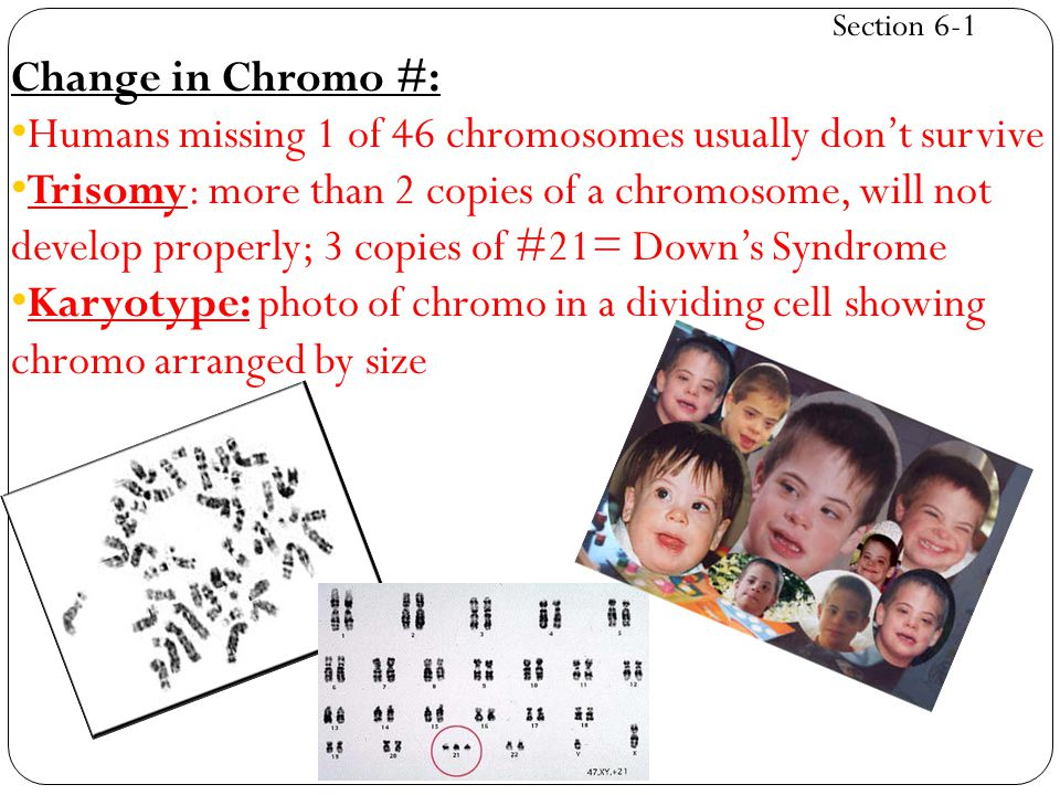 Humans missing 1 of 46 chromosomes usually don't survive