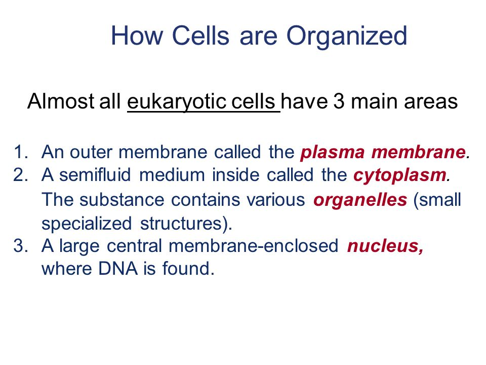 How Cells are Organized