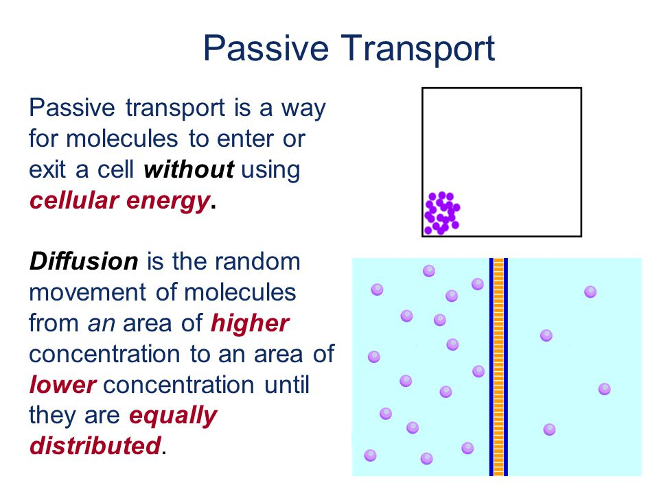 Passive Transport Passive transport is a way for molecules to enter or exit a cell without using cellular energy.