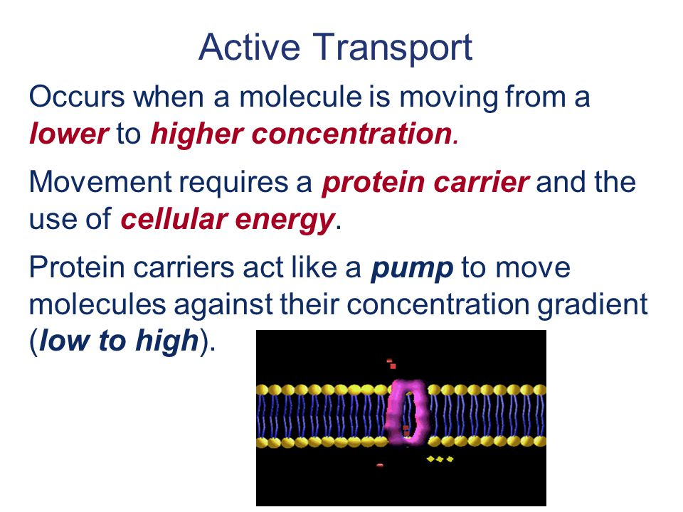 Active Transport Occurs when a molecule is moving from a lower to higher concentration.