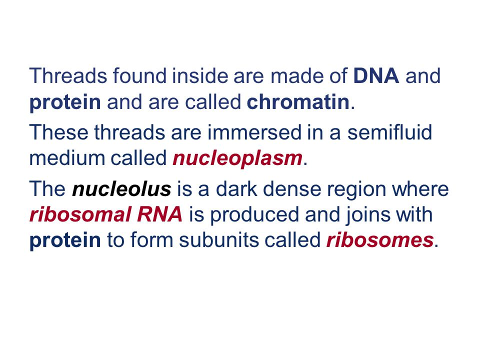 Threads found inside are made of DNA and protein and are called chromatin.