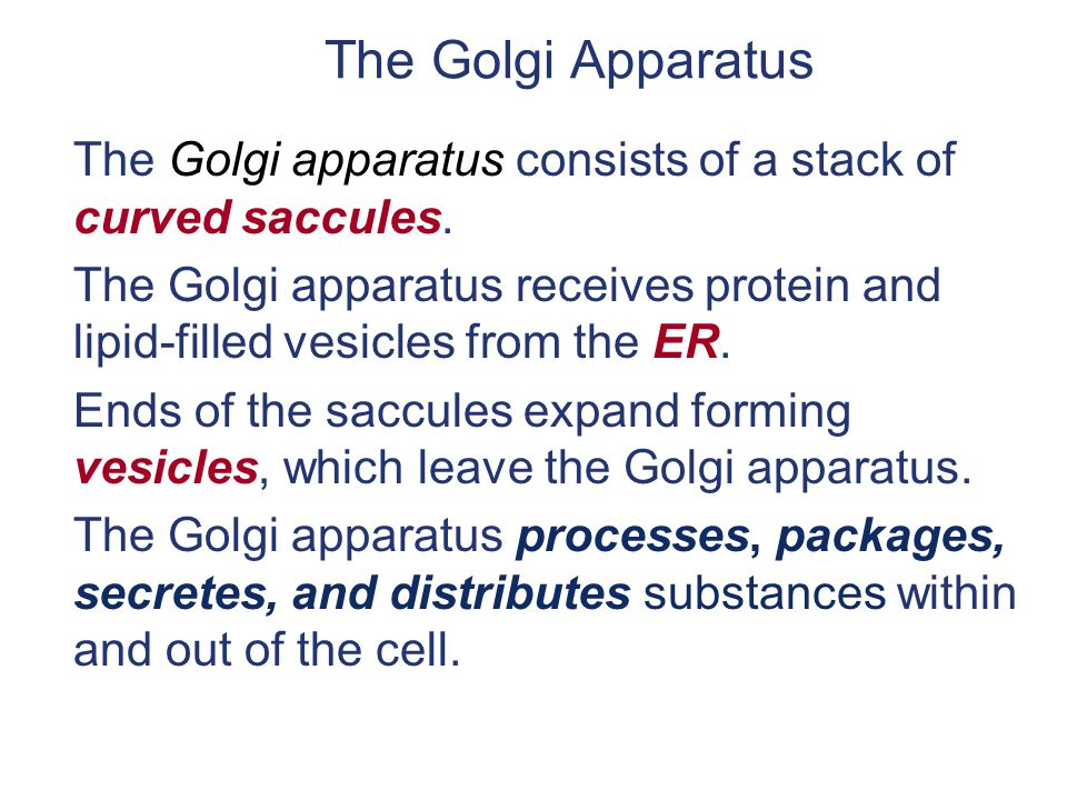 The Golgi Apparatus The Golgi apparatus consists of a stack of curved saccules.