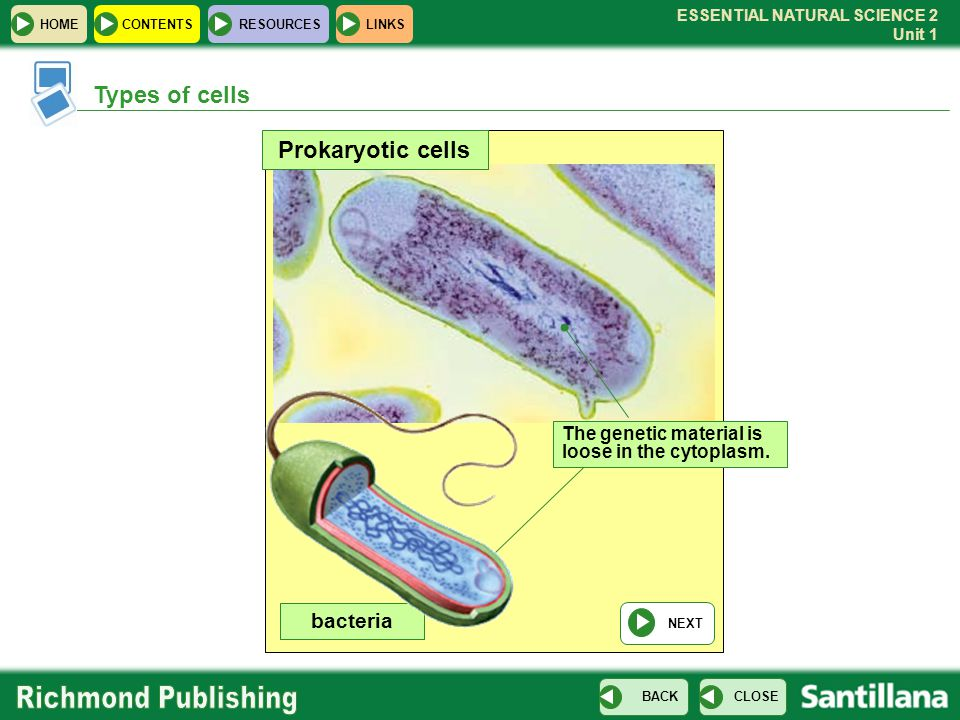 Types of cells Prokaryotic cells bacteria