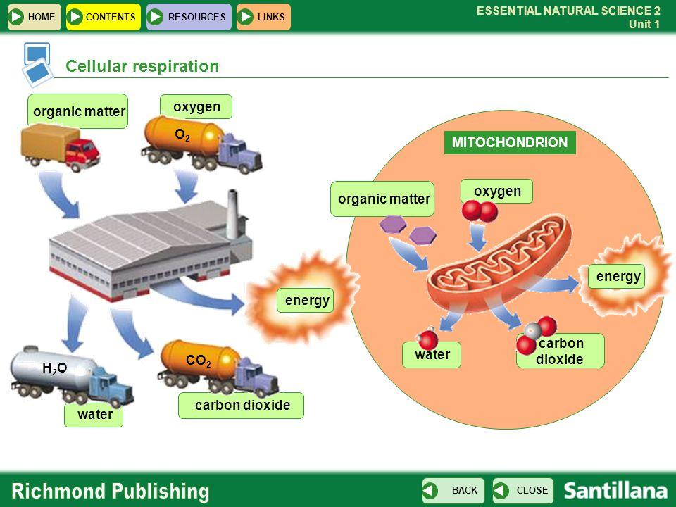 Cellular respiration oxygen organic matter O2 MITOCHONDRION oxygen