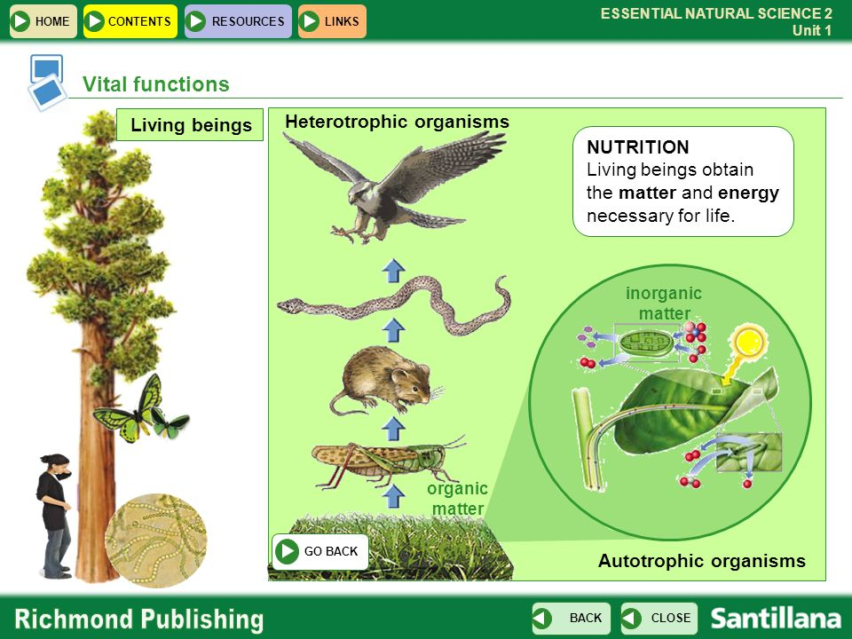 Vital functions Heterotrophic organisms Living beings NUTRITION