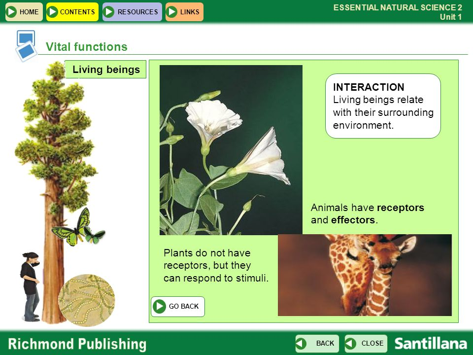 Vital functions Living beings INTERACTION Living beings relate