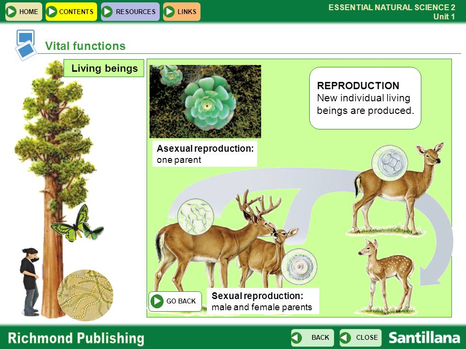 Vital functions Living beings REPRODUCTION New individual living