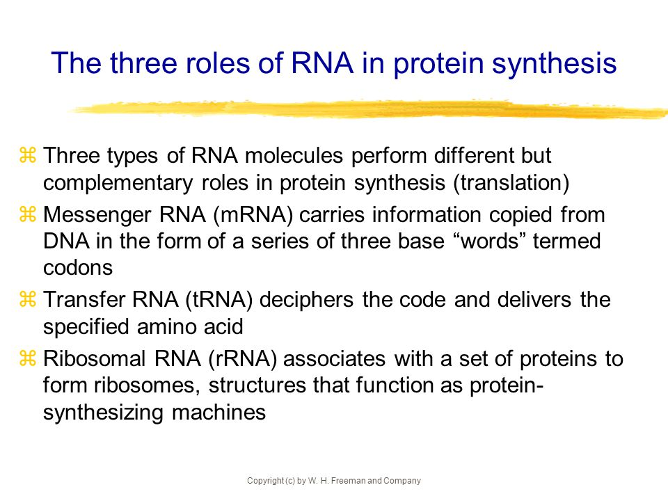 In protein sysnthesis