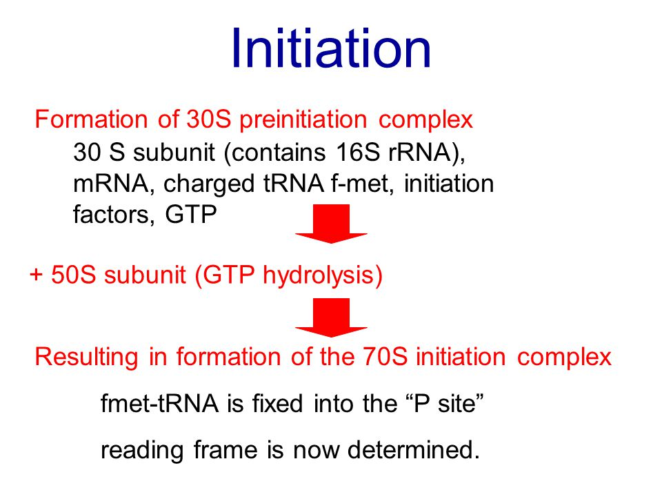 Initiation Formation of 30S preinitiation complex