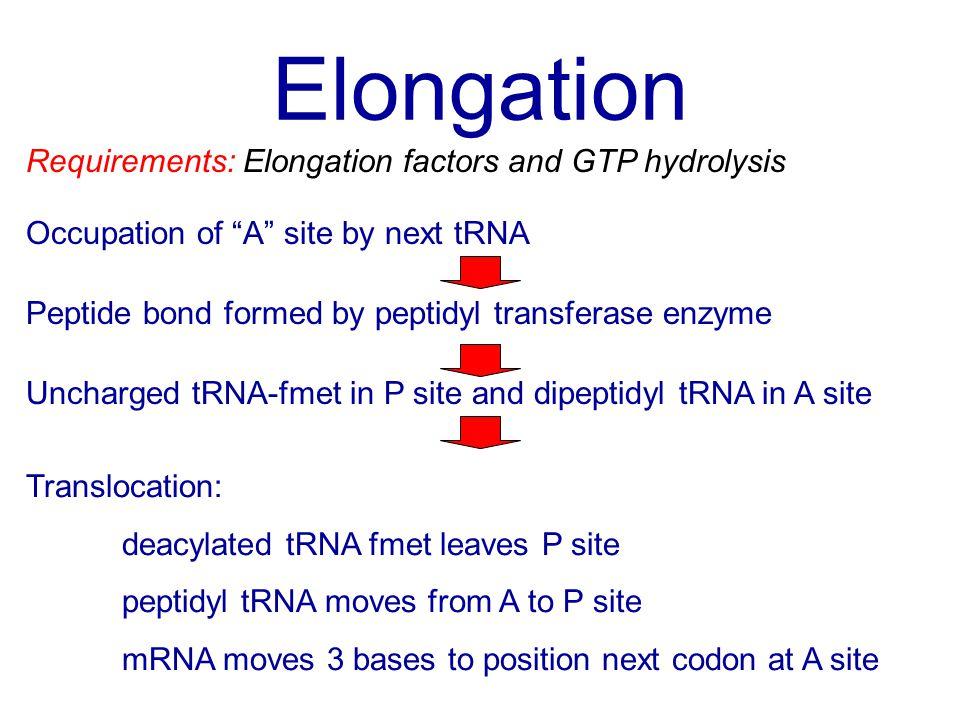 Elongation Requirements: Elongation factors and GTP hydrolysis