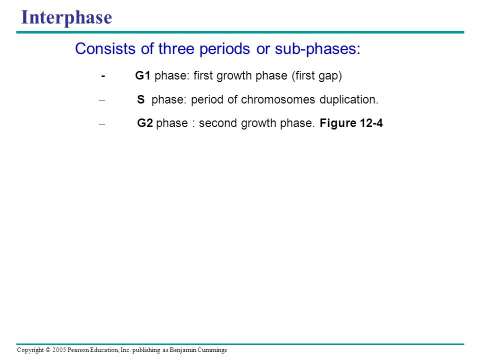 Interphase Consists of three periods or sub-phases: