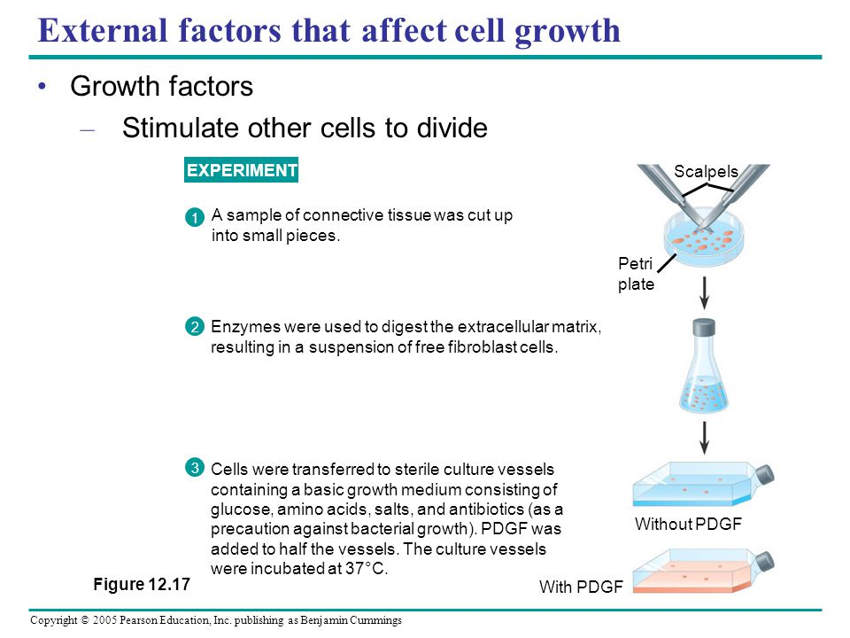External factors that affect cell growth