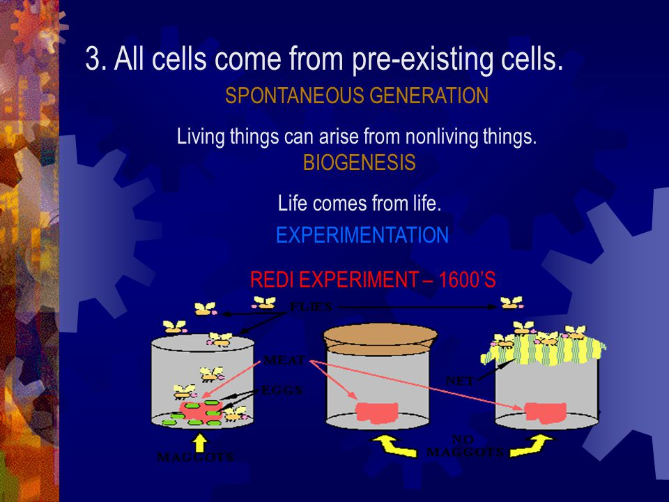 3. All cells come from pre-existing cells.