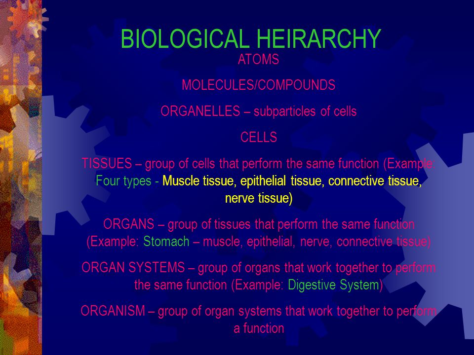ORGANELLES – subparticles of cells