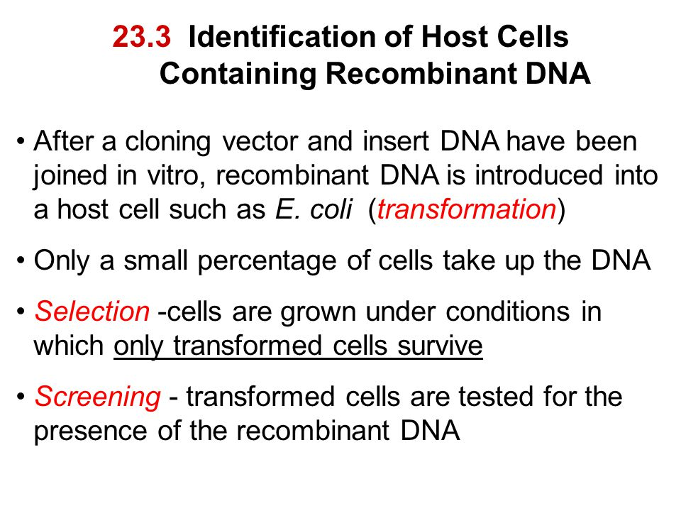 23.3 Identification of Host Cells Containing Recombinant DNA