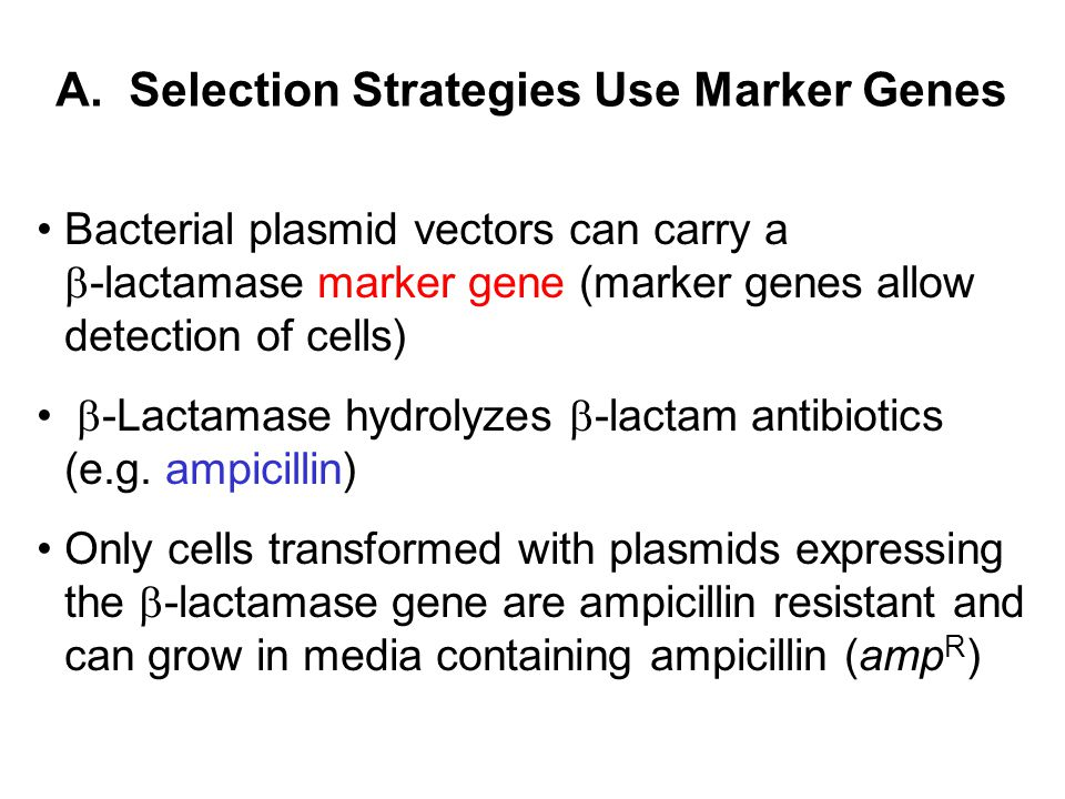 A. Selection Strategies Use Marker Genes