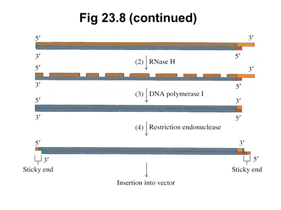 Fig 23.8 (continued)