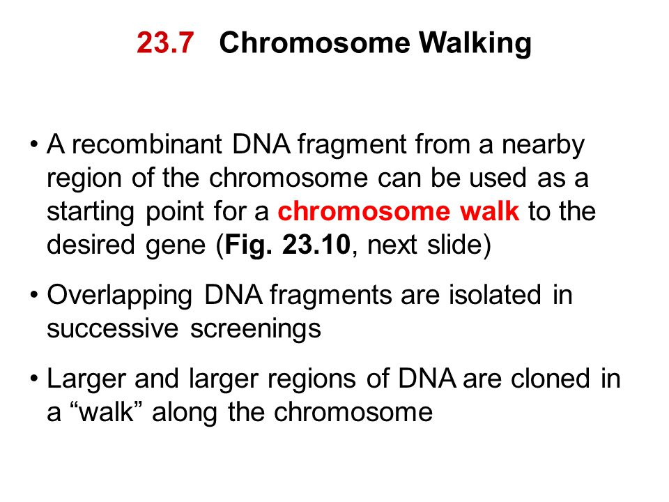 23.7 Chromosome Walking