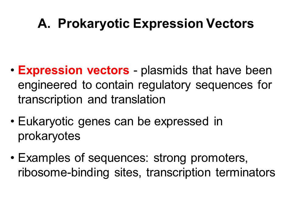 A. Prokaryotic Expression Vectors