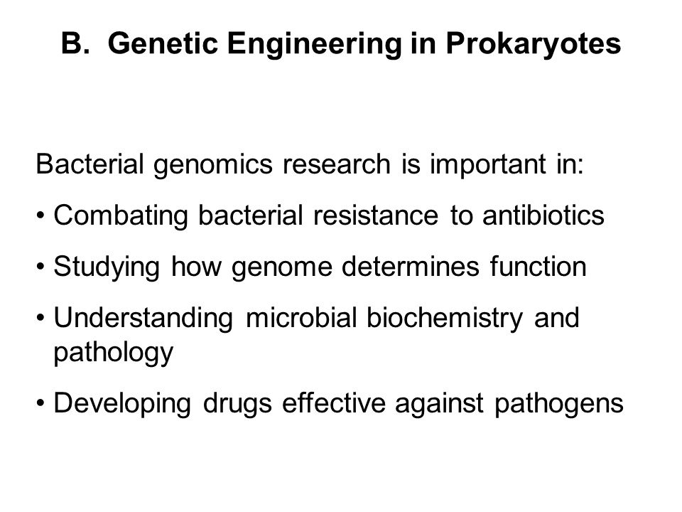 B. Genetic Engineering in Prokaryotes