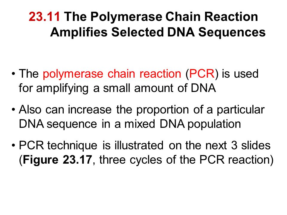 23.11 The Polymerase Chain Reaction Amplifies Selected DNA Sequences